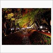 秋の雑感と四方山話(*^^*)