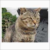 猫の楽園『相島』に渡ってきま...