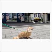 ハッピーの慰労に    #犬 #ハッピー #ミニチュアダックスフント #お台場ドッグリゾート #水泳